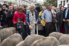 Spain: 23rd edition of Transhumance Festival in Madrid, 23 Oct. 2016
