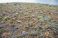 Hillside in spring on Umptanum Ridge eastern Washington USA&#xA;<br />