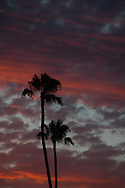 Photo sunset wall art. Santa Monica neon pink sky, palm trees, beach. Matted print, Westside, Venice, Los Angeles, Southern California photography. Fine art photography limited edition.