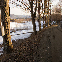 Sap buckets on maple trees on a dirt road in Pomfret, Vermont.