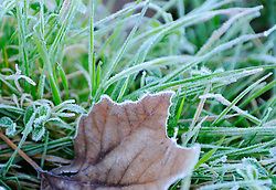 Overnight temperatures in January dipped just below freezing in the Salinas area, leaving frost on many surfaces.