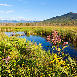 Cherry Mountain and the distant Presidential Range as seen from Pondicherry National Wildlife Refuge in New Hampshire's White Mountains. Joe-pye weed.