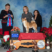 Shoreline Dog Fanciers 12/07/2019