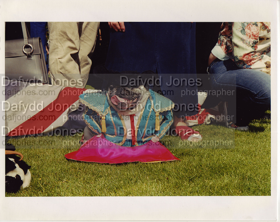 a pug owners picnic dressed matador at glyndebourne.ONE TIME USE ONLY - DO NOT ARCHIVE  © Copyright Photograph by Dafydd Jones 66 Stockwell Park Rd. London SW9 0DA Tel 020 7733 0108 www.dafjones.com