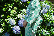 JAPAN, TOKYO -  Kururi Kimono from the shop in Omotesando - Shooting in front of Ajisai hydrangea blue flowers 06-2014
