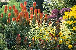 Hot border in the Peacock Garden at Great Dixter. Planting includes Kniphofia uvaria 'Nobilis', Eupatorium purpureum subsp. maculatum 'Atropurpureum', Rudbeckia 'Herbstsonne' and Artemisia lactiflora