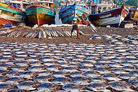 Sri Lanka, province de l'ouest, district de Gampaha, Negombo, village des pecheurs, poissons seches // Sri Lanka, Western Province, Negombo, fishermen's village, Negombo beach, dry fishes