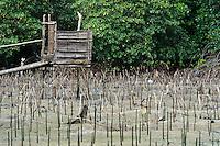 Latrine in a mangrove rehabilitation area, Dudepo, Bolmong Selatan, Sulawesi, Indonesia.