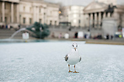 UNITED KINGDOM, London: 27 February 2018 A seagull stands on the frozen water of one of the fountains in Trafalgar Square in the heart of London this afternoon.<br /> Rick Findler  / Story Picture Agency