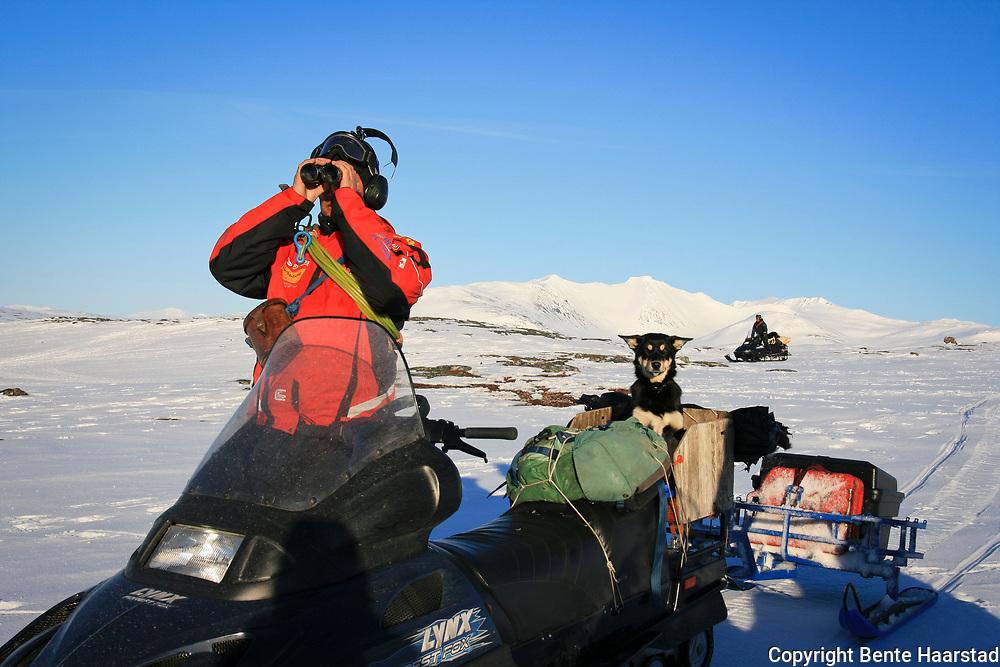 Vårflytting Essand reinbeitedistrikt. Dag Lennart Bendiksen har med gjeterhunden på passasjerplass på skuteren. Sylene i bakgrunnen.