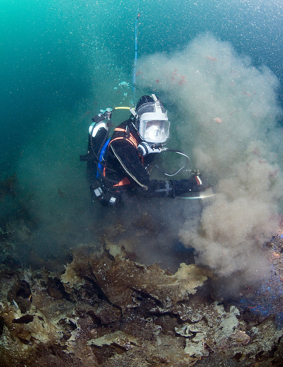 Diver cleaning fence to protect greate scallop (Pecten maximus) from crabs and sea stars.  Location: Kvitsoy, Norway