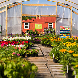 A greenhouse full of annual plants at Emery Farm in Durham, New Hampshire.