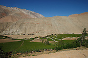 A view of the endless vines and rocky mountains in Pisco Elqui, Elqui Valley, Chile