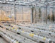 AEROTROPOLIS, AMSTERDAM SEPTEMBER 2015<br />Genomic laboratories where are created the plants of tomorrow.<br />@Giulio Di Sturco