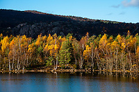 Imsvatnet, Sandnes, Norway. Colourful autumn colours.