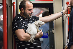 © Licensed to London News Pictures. 01/07/2015. London, UK. A man cools down his pet dog at a carriage window on a day in which commuters and tourists struggle with the intense heat on the London Underground today (01/07) on what is set to be the hottest day this decade. Photo credit : James Gourley/LNP