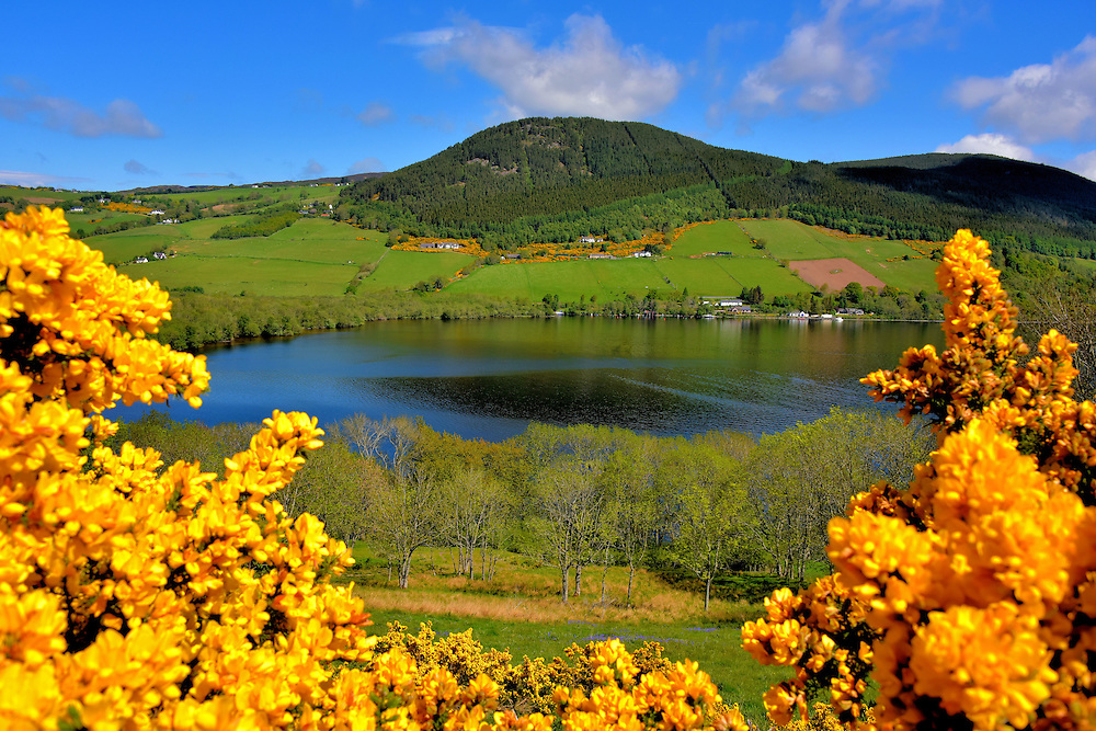 Yellow Gorse Framing Loch Ness in Scottish Highlands, Scotland<br />
