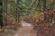 Pine Barrens autumn