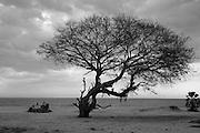 Tree near Komari. East Coast.