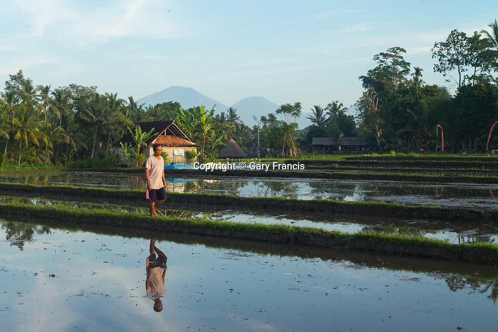 Subak irrigation rice images taken, on February 2017 in Tabanan, Bali, Indonesia