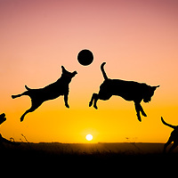 Happy/Playing dogs