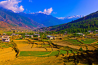 Rice terraces, Paro Valley, Bhutan