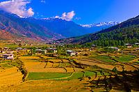 Rice terraces, Paro Valley, Bhutan