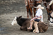 Luis Alfonso Franco, Jr. tries to get a stubborn steer to stand after team roping as his father an uncle look on at the family Charreria practice session in the Jalisco Highlands town of Capilla de Guadalupe, Mexico. The Franco family has dominated Mexican rodeo for 40-years and has won three national championships, five second places and five third places.