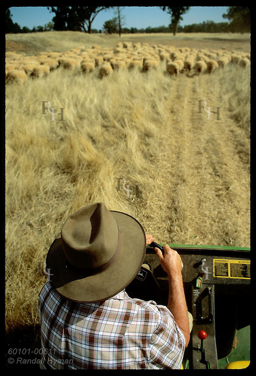 Jack Veitch is all hat in view from above as he herds sheep in all-terrain vehicle;Coolamon NSW Australia
