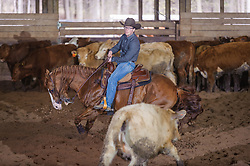 April 29 2017 - Minshall Farm Cutting 1, held at Minshall Farms, Hillsburgh Ontario. The event was put on by the Ontario Cutting Horse Association. Riding in the 250 Novice Rider Class is Chet Martin on Lectic N Chic owned by the rider.