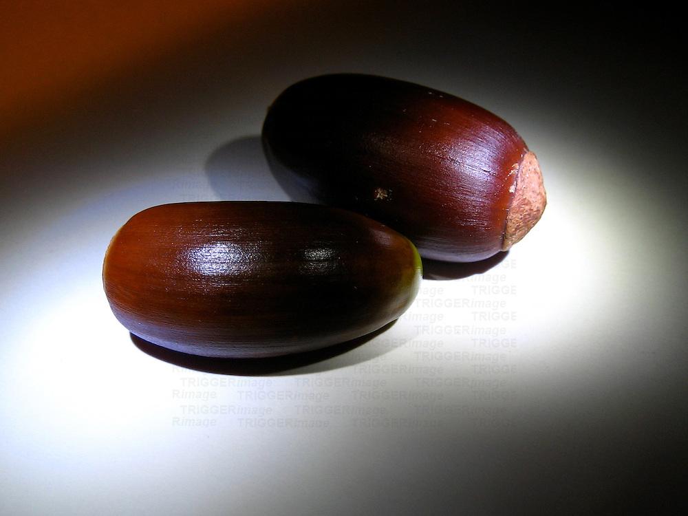 A macro shot of two hazel nuts