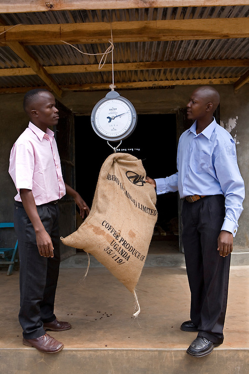 Anthony Tenywa, Ibero Coffee, and Joseph Jingo Nkumbi from Kulika, weighing coffee that a farmer has brought in to sell to Ibero through Kulika. The Kulika project run Sustainable Organic Agricultural Training Programs.