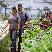 JULY 20, 2018---MANATI, PUERTO RICO----<br /> Efr&eacute;n D. Robles and his wife Angelie Mart&iacute;ne, owners of Frutos del Guacabo, a culinary agriculture farm, inside one of their hydroponic green houses.<br /> (Photo by Angel Valentin/Freelance)