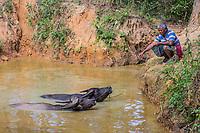 KALAW, MYANMAR - DECEMBER 07, 2016 : farmer and Bufallos bathing in the Shan state of Myanmar (Burma)