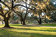 Old Shack and Live Oaks (Quercus viginiana), South Carolina Low Country, USA. This amazing property was protected in part through funding from the South Carolina Conservation Bank.