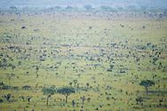 African elephant, Loxodonta africana, Afrikanischen Elefanten, elefante africano de sabana, éléphant d'Afrique, 非洲象, アフリカゾウ属, فيل أفريقي