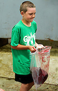 PRICE CHAMBERS / NEWS&amp;GUIDE<br /> Eli Rammell, 9, earns some extra allowance as he helps his father remove a cow liver, learning the family business at a young age.