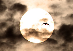MAR 27 2013 Birds flying past Moon
