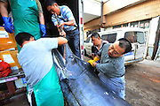 QINGDAO, CHINA - SEPTEMBER 22: (CHINA OUT) <br /> <br /> Fishermen Catch 3.8-meter-long Swordfish In Yellow Sea<br /> <br /> A 3.8-meter-long swordfish caught by fishermen is prepare to sale at the market on September 22, 2015 in Qingdao, Shandong Province of China. Fishermen caught a 3.8-meter-long, 345-kilogram swordfish in the Yellow Sea on Monday. <br /> ©Exclusivepix Media