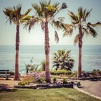 Laguna Beach Heisler Park retro picture of palm trees overlooking the Pacific Ocean. Image Copyright © Paul Velgos All Rights Reserved.