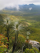 "Grass trees grow on Bluff Knoll, which rises to 1099 metres (3606 feet) above sea level in the Stirling Range in Western Australia. Bluff Knoll is one of only a few places to receive regular snowfalls in most years in Western Australia (WA). Its aboriginal name Koikyennuruff describes the ""place of ever-moving about mist and fog."" Stirling Range National Park was declared in 1913 and is now an ecological island in a sea of farmland. 1500 species of flora are packed within the park, more than in the entire British Isles. 123 orchid species grow here. 87 plant species found in the Stirling Range occur nowhere else on earth. The Stirling Range was born from river delta sediments deposited 1800-2000 million years ago (Palaeoproterozoic), then metamorphosed weakly into sandstone, quartzite, and shale rocks and deformed more than 1200 million years ago. Buried deep in the Earth's crust, today's Stirling Range was gradually exposed by weathering and erosion over time. Bluff Knoll is 337 km (4.5 hours drive) southeast of Perth and 100 km northeast of Albany via Chester Pass Road. An ideal time to visit is late spring and early summer (October to December), when days are beginning to warm up and the wildflowers are at their best. Winter, between June and August, is cold and wet. Allow three to four hours  to complete 5 km round trip on the Top Trail."