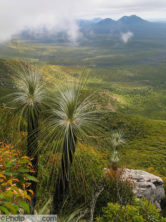 """Grass trees grow on Bluff Knoll, which rises to 1099 metres (3606 feet) above sea level in the Stirling Range in Western Australia. Bluff Knoll is one of only a few places to receive regular snowfalls in most years in Western Australia (WA). Its aboriginal name Koikyennuruff describes the """"place of ever-moving about mist and fog."""" Stirling Range National Park was declared in 1913 and is now an ecological island in a sea of farmland. 1500 species of flora are packed within the park, more than in the entire British Isles. 123 orchid species grow here. 87 plant species found in the Stirling Range occur nowhere else on earth. The Stirling Range was born from river delta sediments deposited 1800-2000 million years ago (Palaeoproterozoic), then metamorphosed weakly into sandstone, quartzite, and shale rocks and deformed more than 1200 million years ago. Buried deep in the Earth's crust, today's Stirling Range was gradually exposed by weathering and erosion over time. Bluff Knoll is 337 km (4.5 hours drive) southeast of Perth and 100 km northeast of Albany via Chester Pass Road. An ideal time to visit is late spring and early summer (October to December), when days are beginning to warm up and the wildflowers are at their best. Winter, between June and August, is cold and wet. Allow three to four hours  to complete 5 km round trip on the Top Trail."""