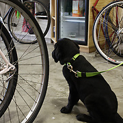 Animals are welcome in the small community bicycle shop.
