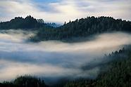 Fog, Mist, & Rain