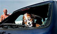 SCHEVENINGEN - Directeur Frank Dales van de Dierenbescherming tikt een autoruit in om een hond te bevrijden. De Dierenbescherming wil met deze actie een oproep doen om met het oog op het aanstaande warme weekend alert te zijn op honden die achtergelaten zijn in geparkeerde autos. ROBIN UTRECHT FOTOGRAFIE