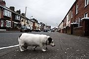 off falls road, belfast, northern ireland, 2009