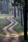 Dirt Road in Kanha National Park, India