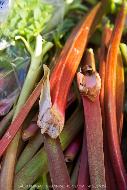 The bright red stems of rhubarb are a familiar sight at farmers' markets in early spring.