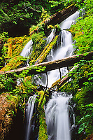 Cascading falls of the Mount Tom Creek in the Hoh Rain Forest.  Olympic National Park, Washington.