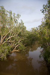 The view from Willare Bridge as paperbarks are reflected in the Fitzroy River. Rains flush muddy water down the Fitzroy in the Kimberley wet season - January 2009.